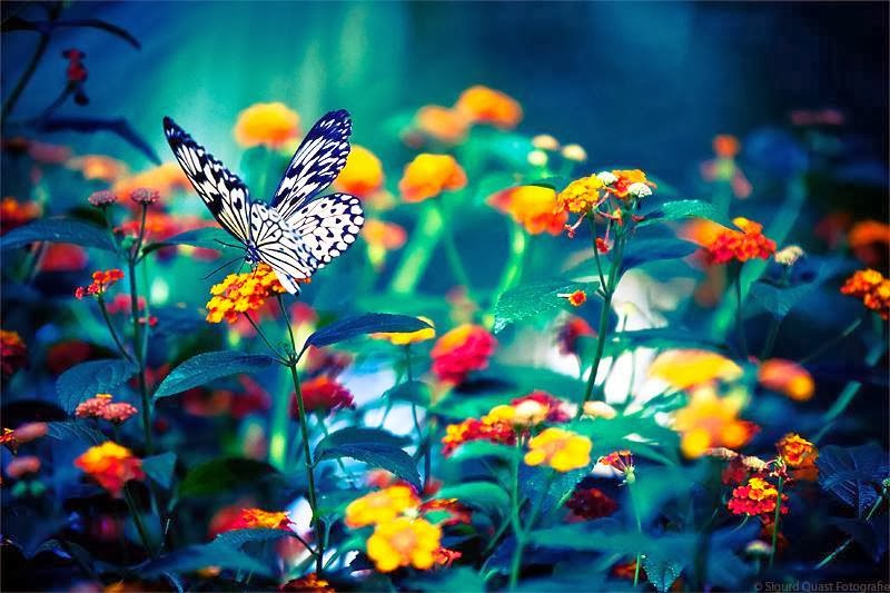 Butterflies And Flower Perfect Match