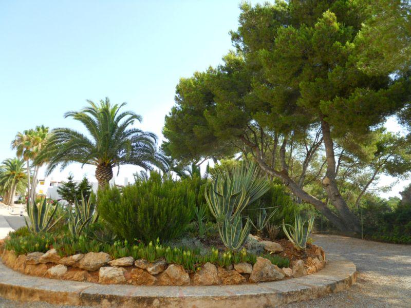 Arte y jardiner a arboles y arbustos para zonas sombr as for Tipos de pinos para jardin fotos