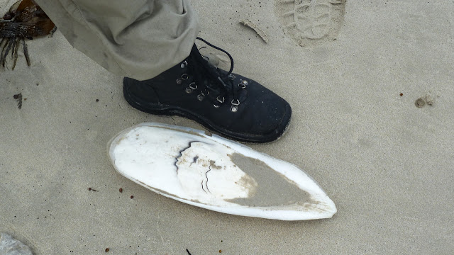 large cuttlefish shell next to boot