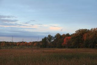 photo of autumn foliage near a marsh