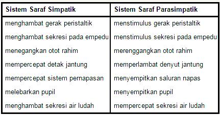 Perbedaan dan Persamaan Saraf Simpatik dan Parasimpatik