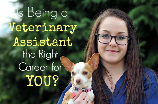 Veterinary Assistant school ordering services