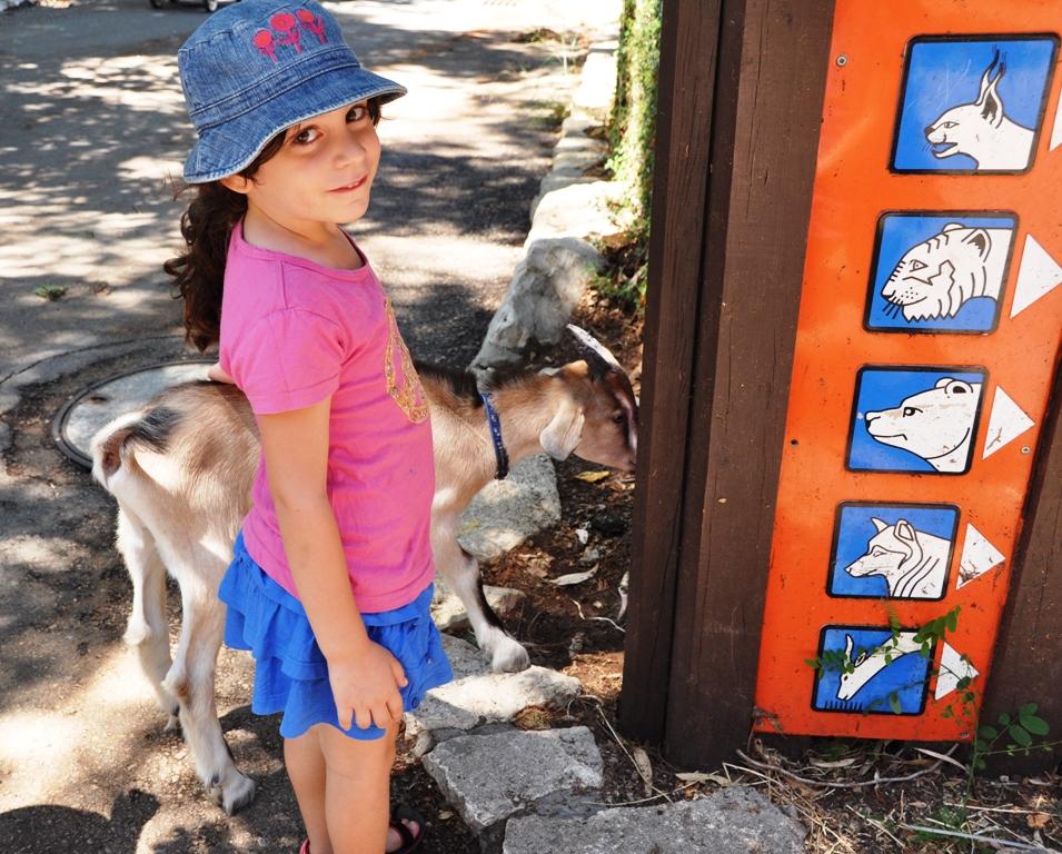 גן החיות בחיפה