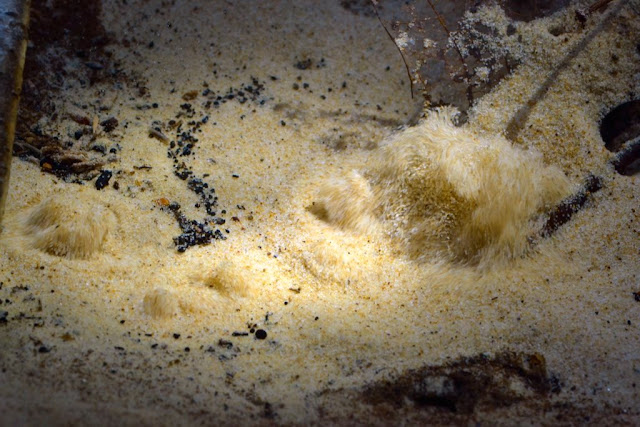 underwater sand boils in a boiling-sand spring