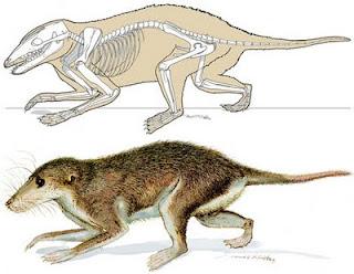 mamiferos del cretaceo Maotherium