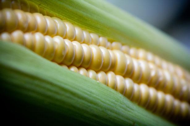 Quais os benefícios do milho verde