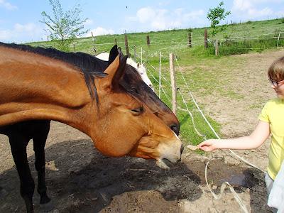 koń, konie, jazda konna, majówka