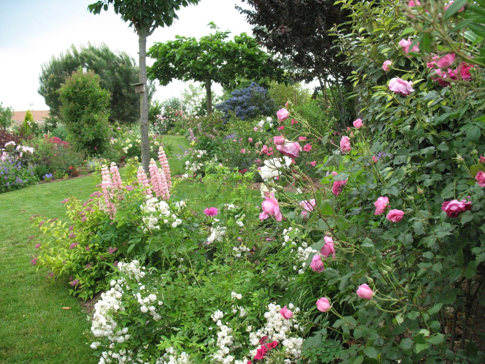 roses du jardin ch neland semis des lupins de russell. Black Bedroom Furniture Sets. Home Design Ideas
