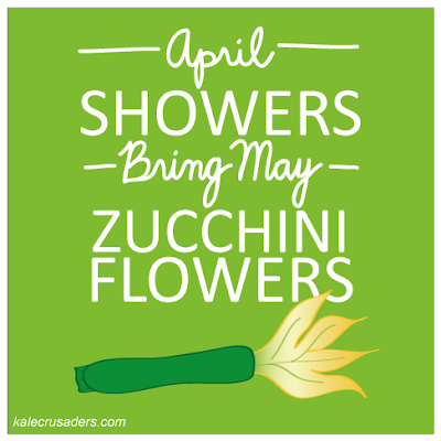 April showers bring May zucchini flowers, April showers bring May zucchini blossoms, April showers bring May courgette flowers, April showers bring May courgette blossoms