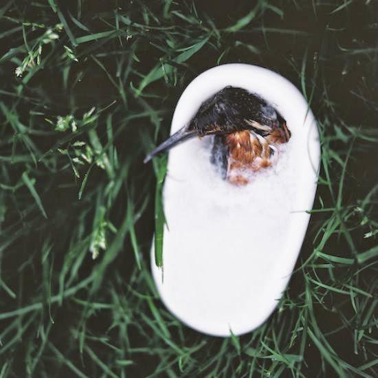 Emir Ozsahin fotografia Pastel Deaths animais mortos como dormindo