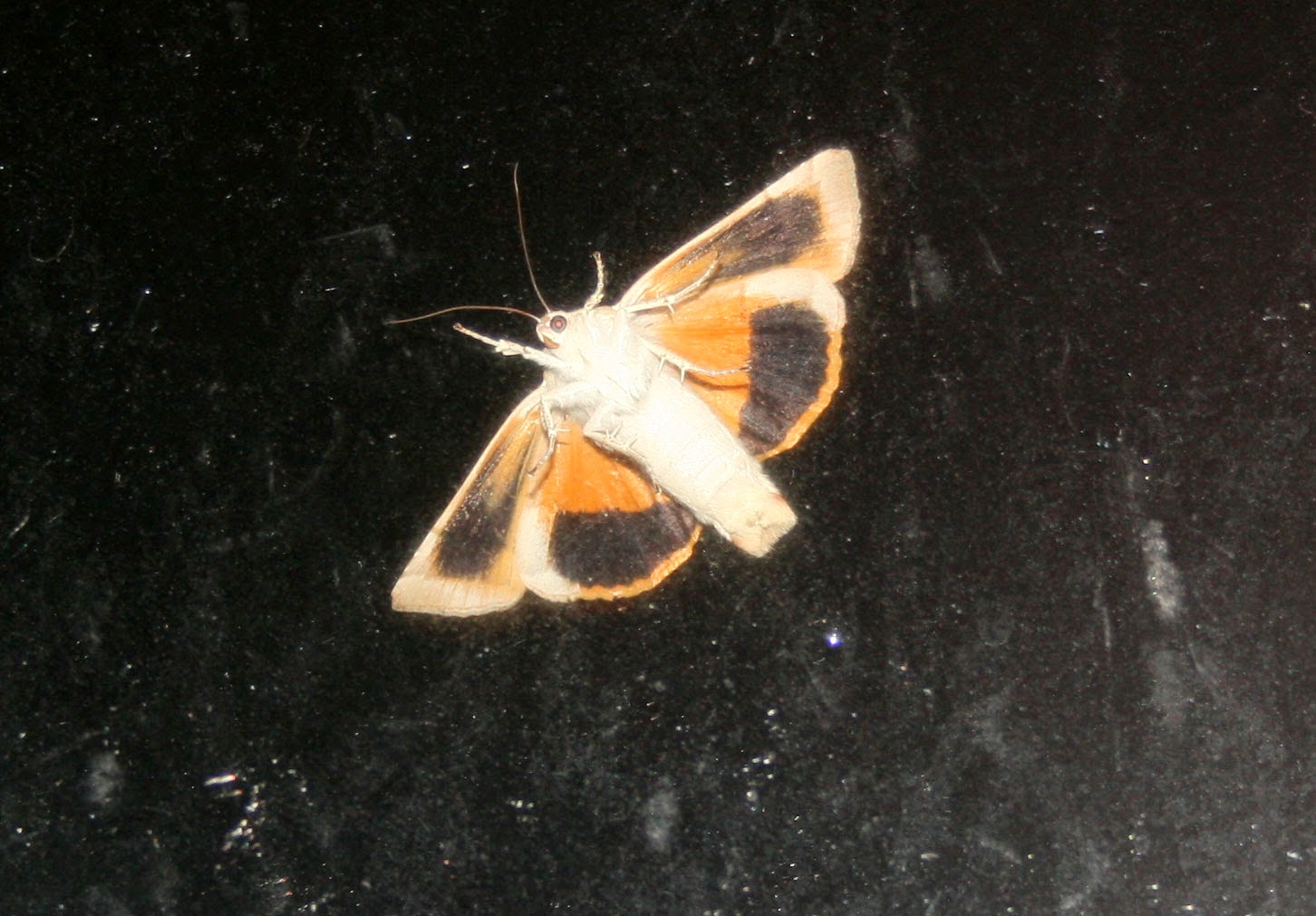 The moth from last night