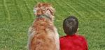 www.adoptabcn.cat