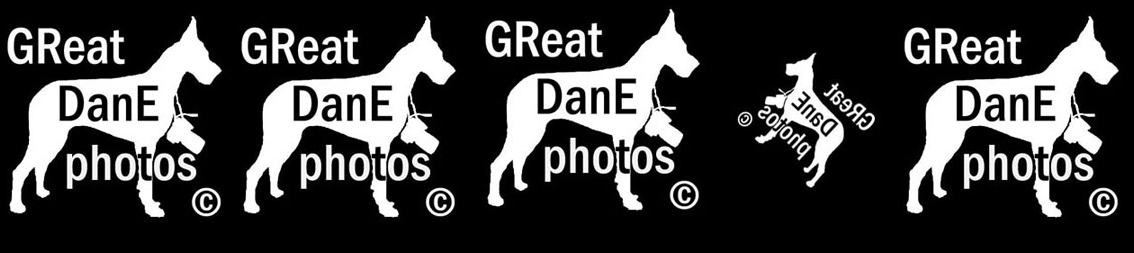 el GReat DanE