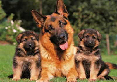 Club razas perros