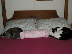 Cat Pillows??