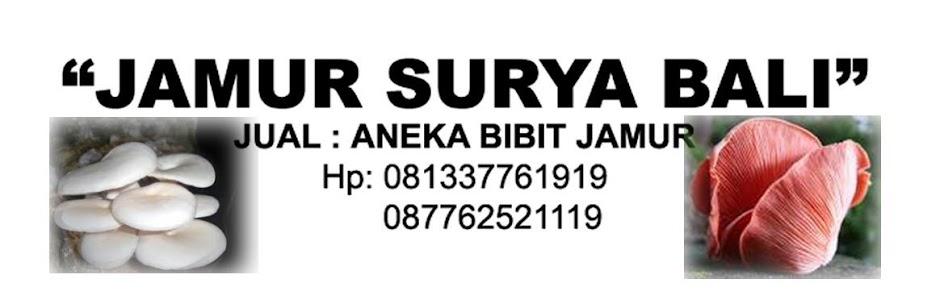 Jamur Surya Bali