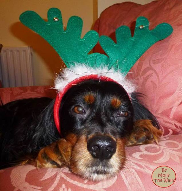 Molly The Wally & Christmas!