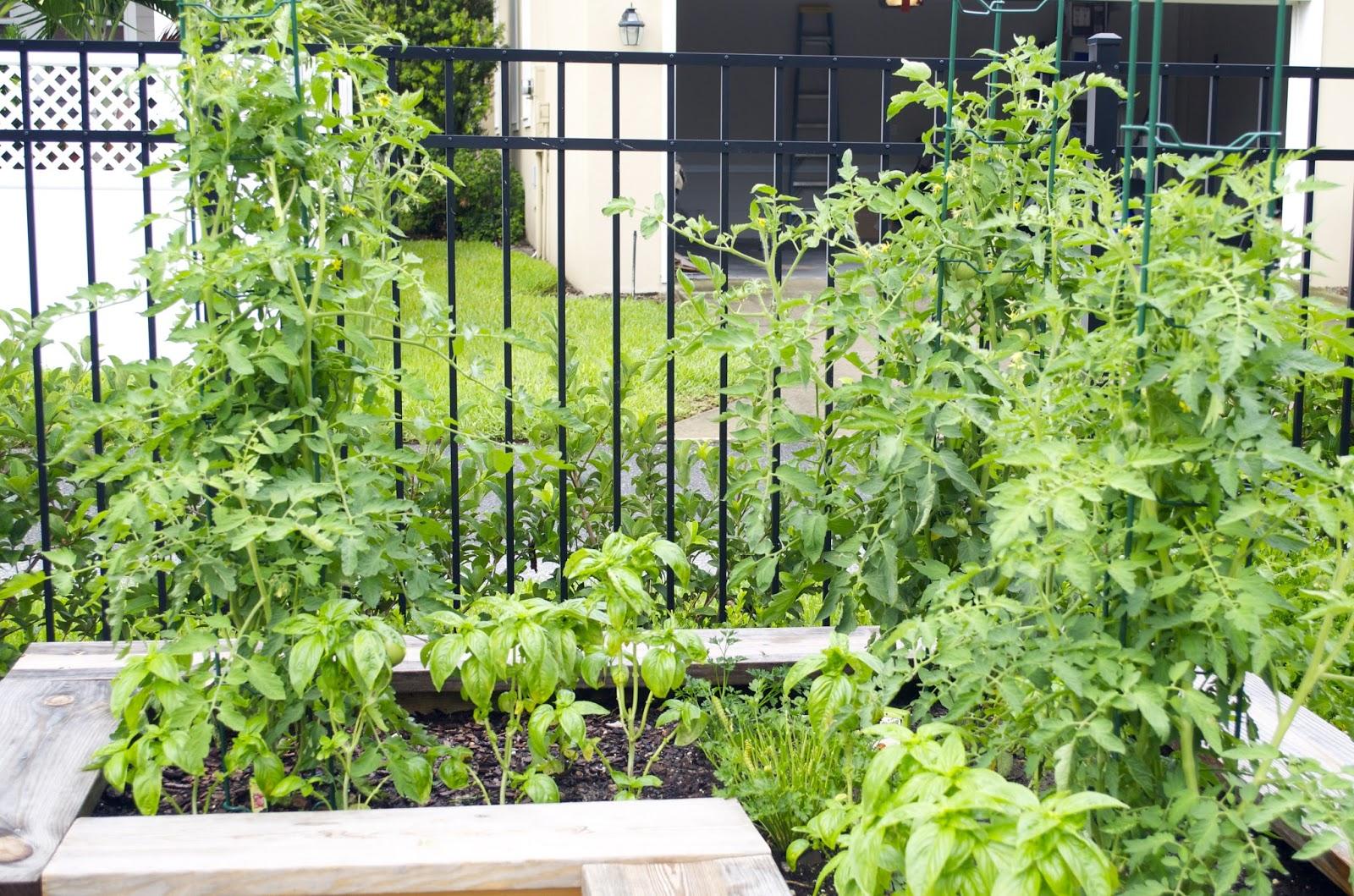 Our Kitchen Garden Milkweed Gardens Our Kitchen Garden Part Iv
