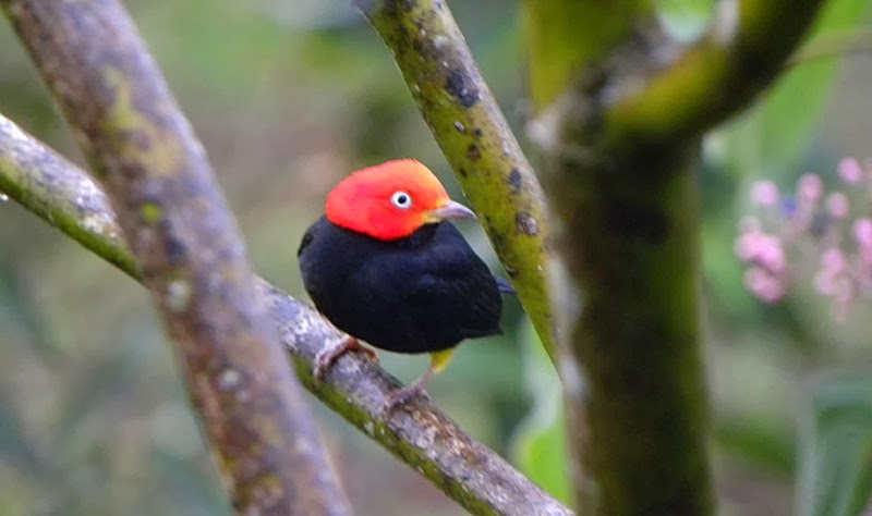 Este es el pájaro que hace el «Moonwalk»
