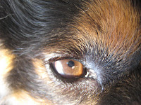 """Our Mika, """"Eye of the Mika"""" by LeAnn (linen & lavender)"""