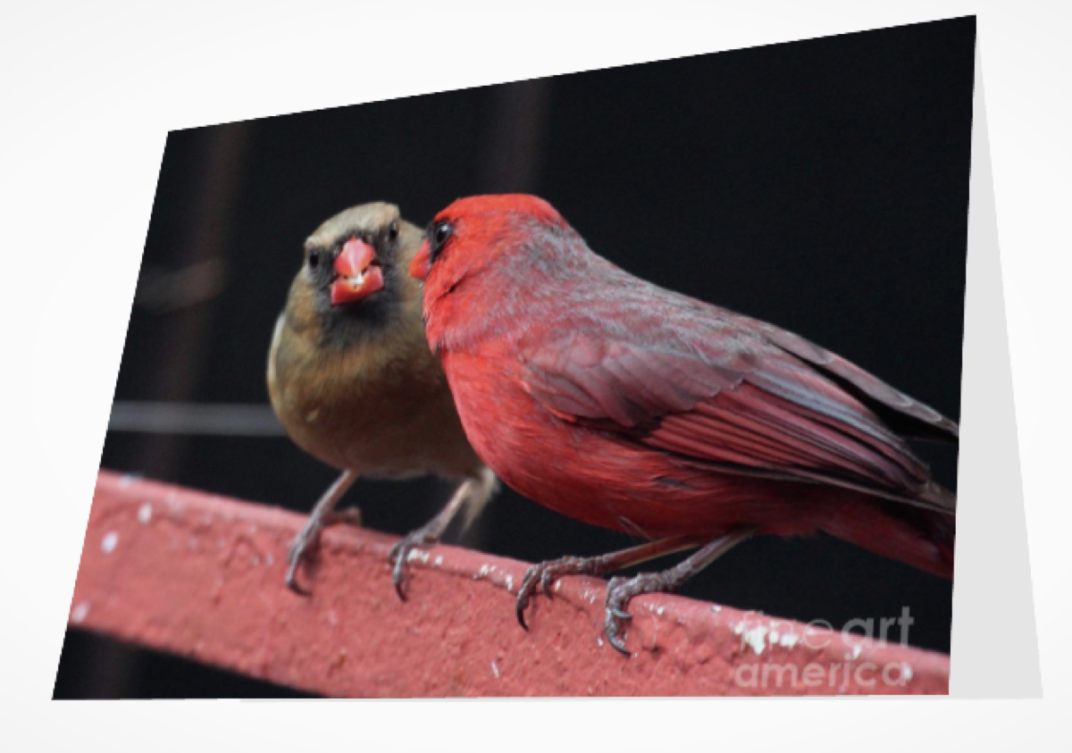 CARDINAL LOVE 1 (GREETING CARD OR PRINT)