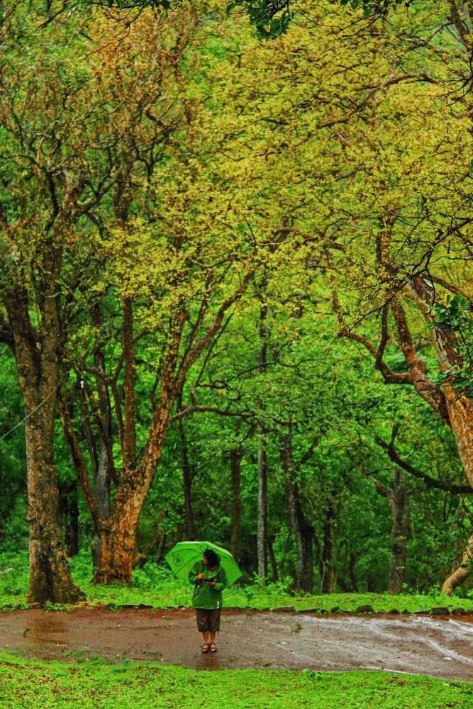 KGudi, BR Hills, Karnataka