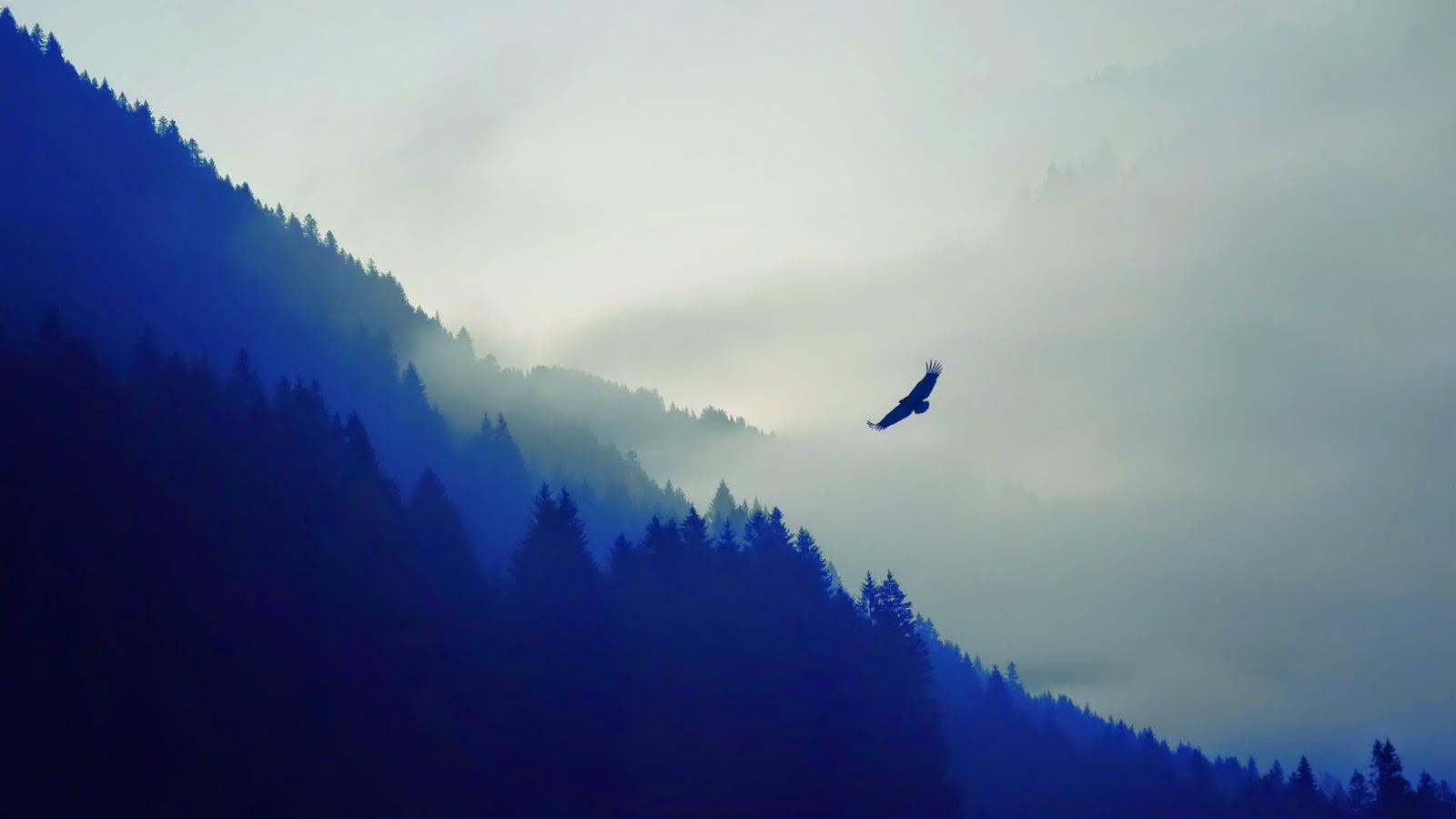 الطير في الضباب خلف الجبال hd
