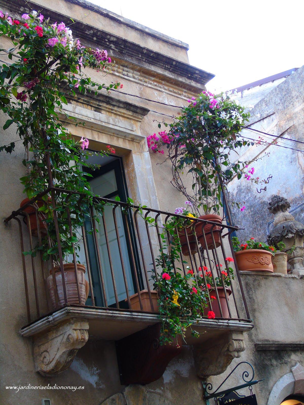Jardineria eladio nonay trepadoras multicolores - Jardineria eladio nonay ...