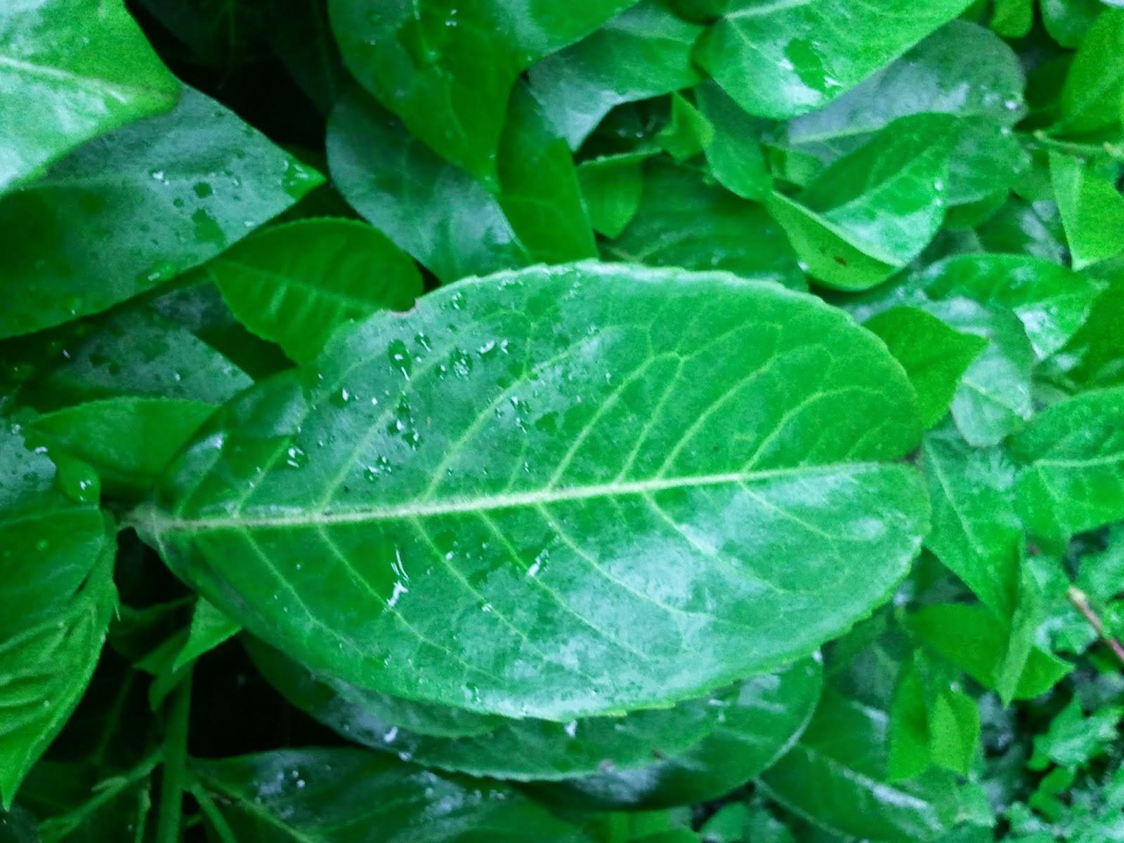 leaf, texture, image