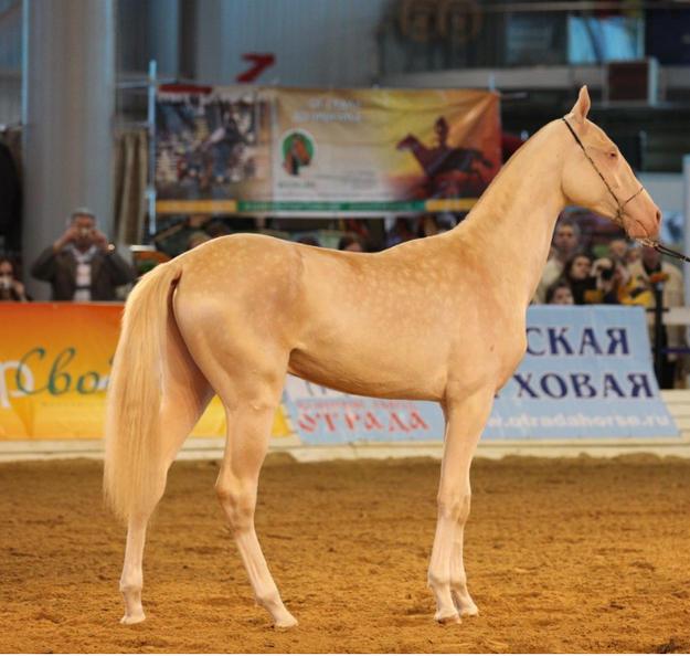 لأجمل الخيول