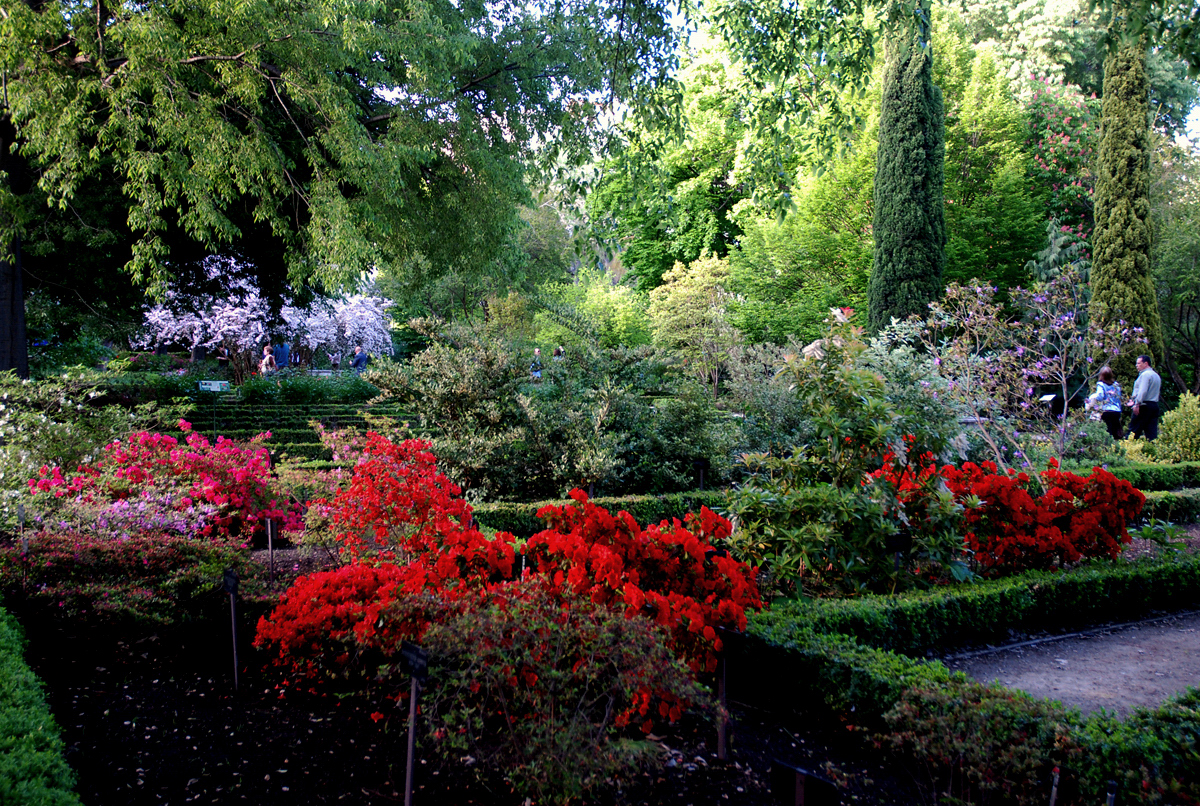 Aldonza torrej n real jard n bot nico de madrid for Jardin botanico madrid horario