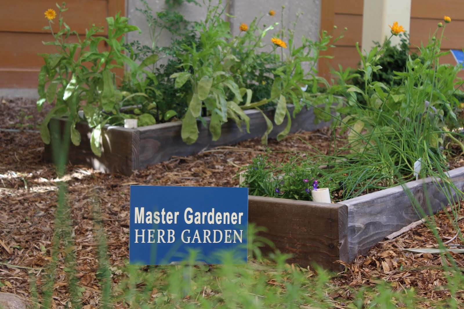 Star Nursery Blog: Stunning Herb Garden Ideas You\'ll Want to Steal