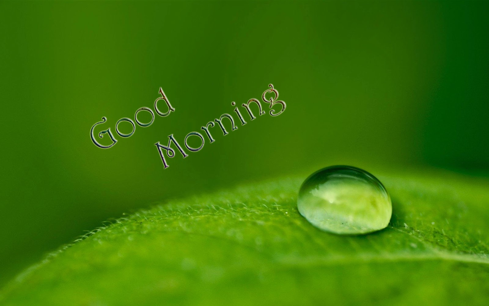 Good Morning Beautiful In Romanian : Lovely and beautiful good morning wallpapers
