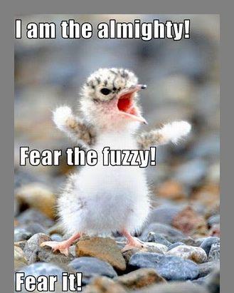 animal sayings funny animal sayings funny animal sayings funny animal