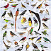 Daftar Nama burung burung yang ada di indonesia lengkap