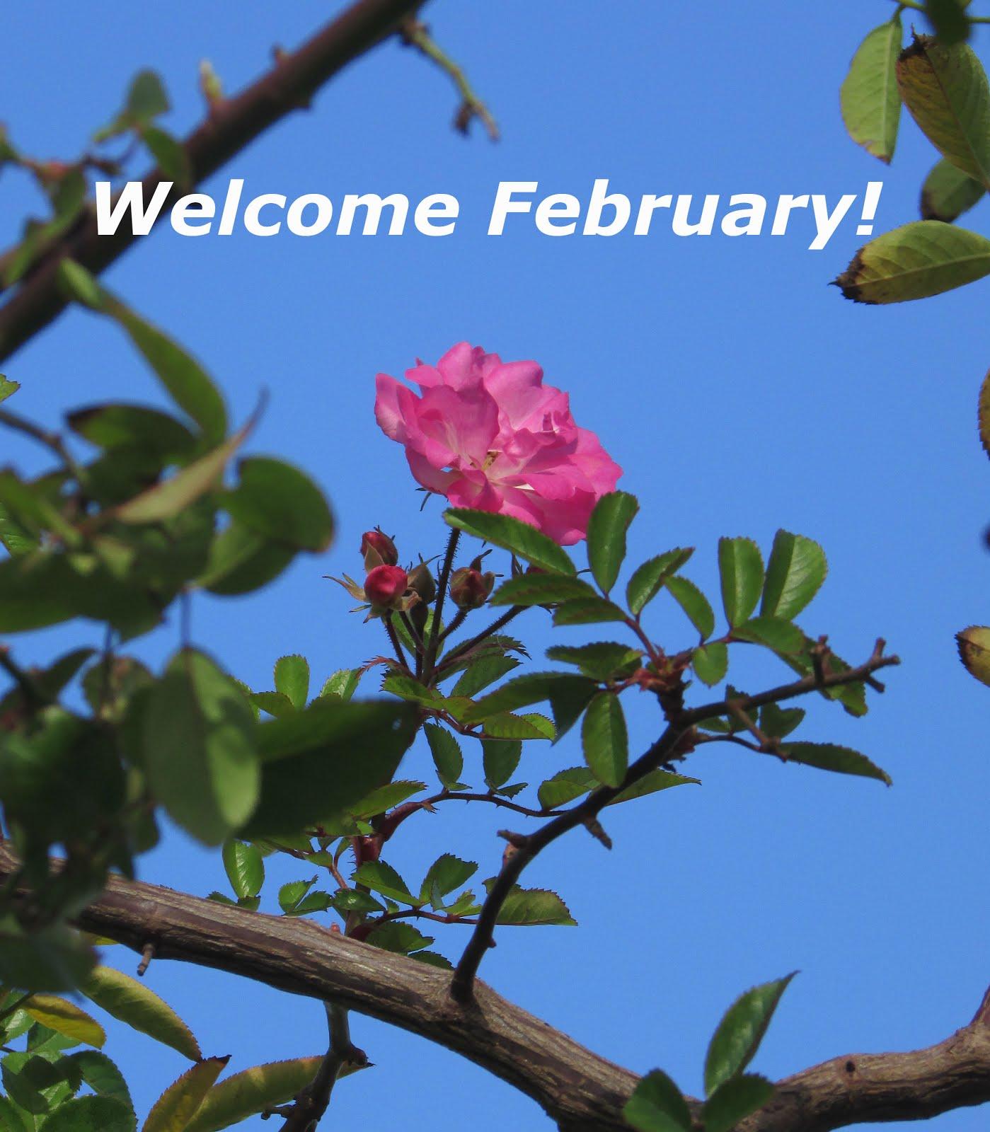 It's Valentine Month!