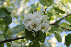 Puutarhapalvelu Tampere e-mail: puutarhapalvelua@gmail.com