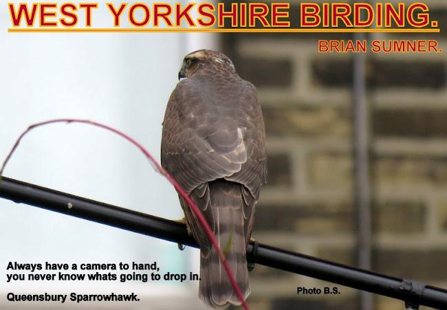 WEST YORKSHIRE BIRDING