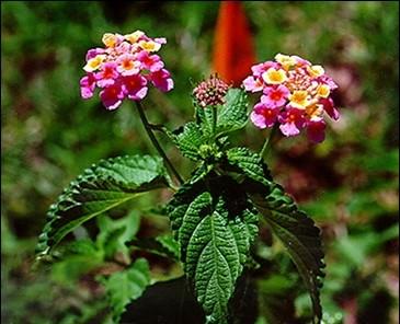 Cuidados com plantas tóxicas