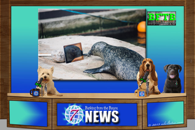 BFTB NETWoof News set with photo of a seal using iPad