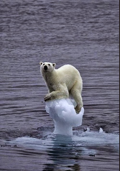 Bear ice iceberg global warming climate change