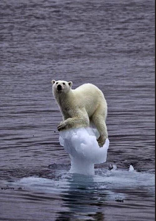 Bear ice iceberg global warming climate change