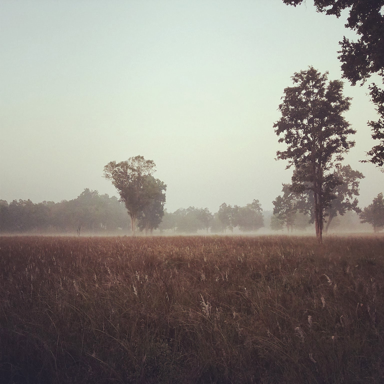 Lovely Winter Mornings of Kanha