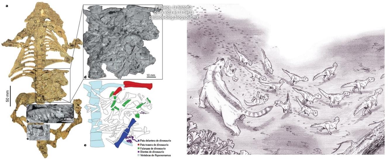 Palaeos, la historia de la Vida en la Tierra: julio 2013