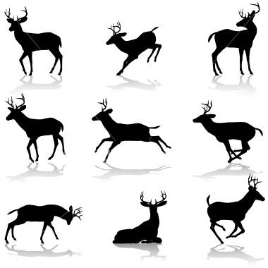 deer silhouette.