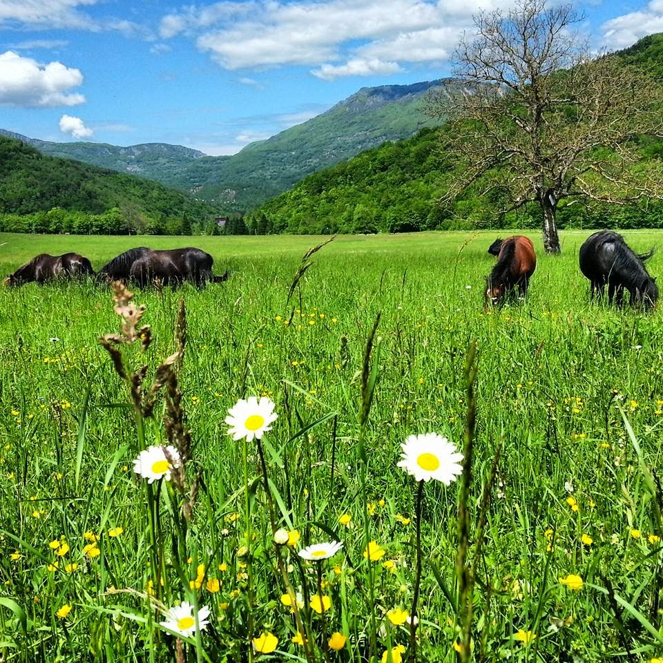 Parque Nacional Sutjeska, na Republika Srpska, Bósnia