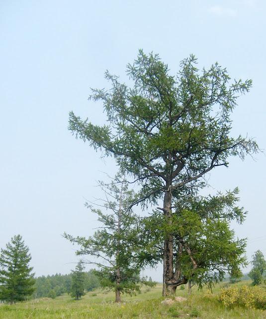 Красивое дерево возле Туима