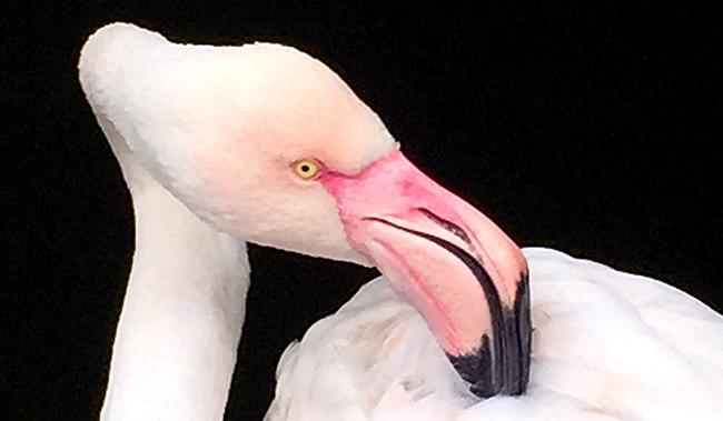 flamingo, rooftop gardens, london