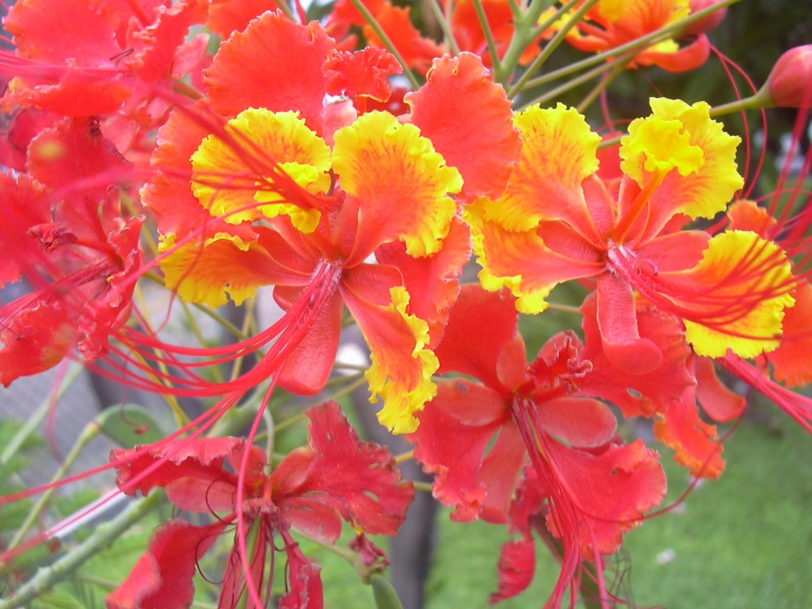 Laras desy laporan praktikum morfologi bunga ccuart Image collections