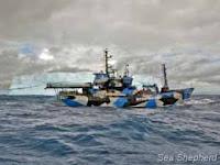 O Bob Barker fazendo o seu caminho através do Santuário de Baleias do Oceano Antártico